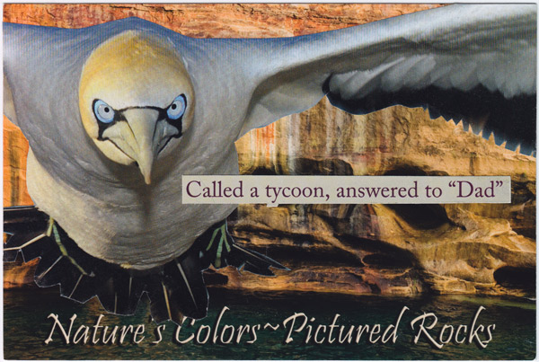 "Collage of a very intense looking bird in front of Pictured Rocks National Lakeshore, with text reading ""Called a tycoon, answered to Dad."""