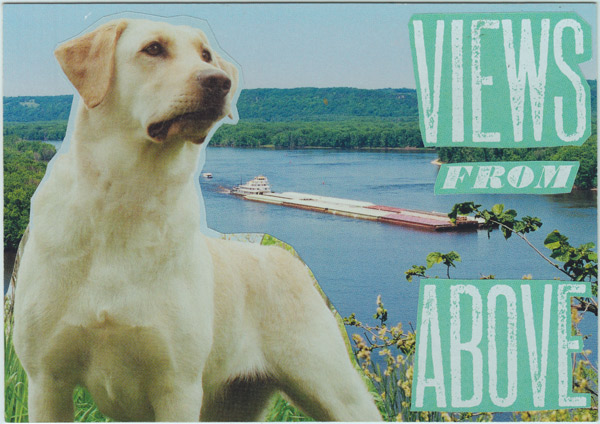 Collage of White lab (dog) overlooking a barge on the Mississippi