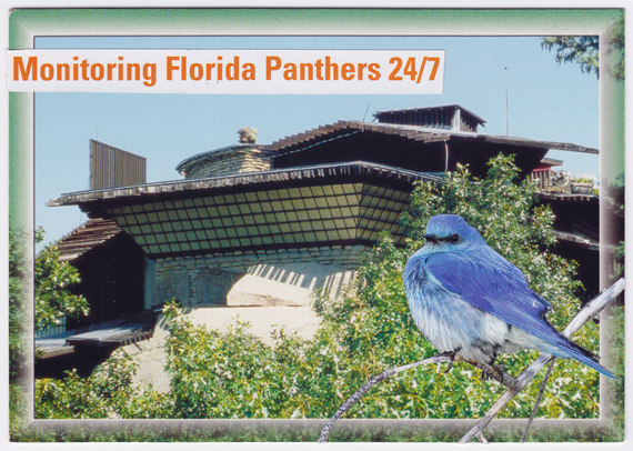 Postcard collage - Monitoring Florida Panthers 24/7