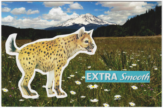 Postcard about extra smooth hyenas, and also owls.