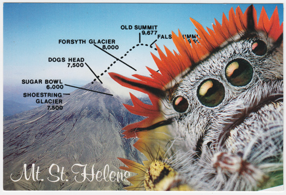 Postcard collage of Mount Saint Helens and gigantic spider