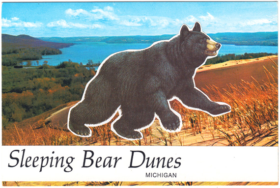 Postcard collage: Black bear climbing up sand dune. Text: Sleeping Bear Dunes, Michigan.