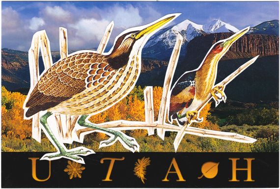"Postcard collage: Birds and reeds in front of a mountain landscape. The bottom of the postcard says ""UTAH""."