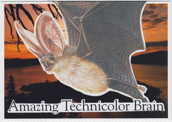 "Postcard collage: A bat flying in front of Crater Lake at sunset, with the text ""Amazing Technicolor Brain"""