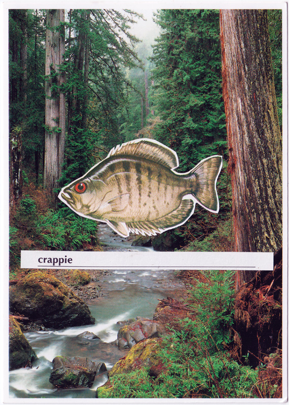 "Postcard collage of a fish in front of a stream in the woods, hovering above the word ""crappie""."