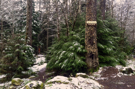 Picture of trees at a trailhead covered with a little snow.
